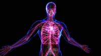 yoga health benefits improve blood flow through veins bxrank