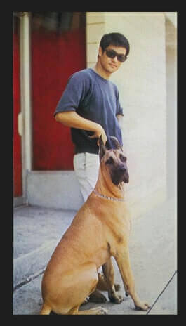 bruce lee with dog bxrank movie master fighter martial arts