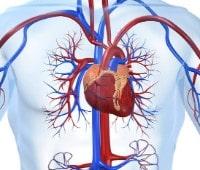 cardiovascular health benefits of yoga pranayama bxrank fit